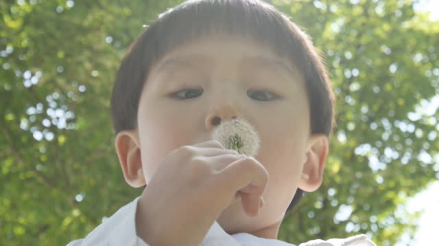 shot of young boy blowing dried dandelion - dandelion stock videos & royalty-free footage