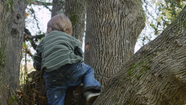 ms ts shot of young boy climbing tree and looking out / hillsboro, oregon, united states - klättring bildbanksvideor och videomaterial från bakom kulisserna