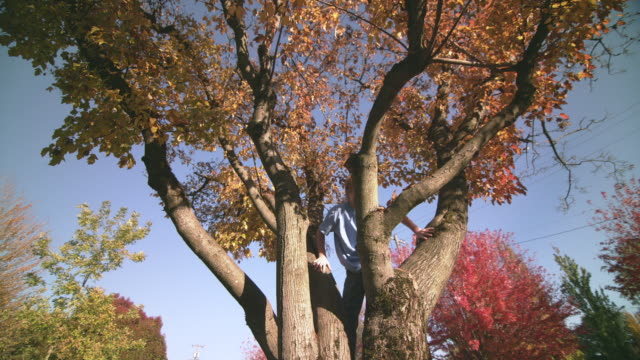 ms la ds slo mo shot of young boy has fun climbing tree full of gorgeous autumn leaves / portland, oregon, united states - portland oregon fall stock videos & royalty-free footage