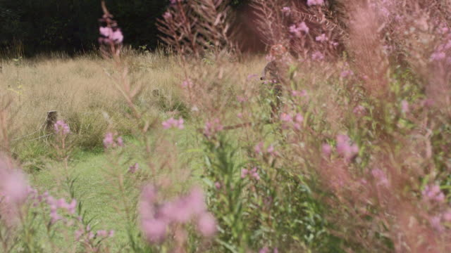 ms pan slo mo shot of young boy riding bike through wild flower field - childhood stock videos & royalty-free footage