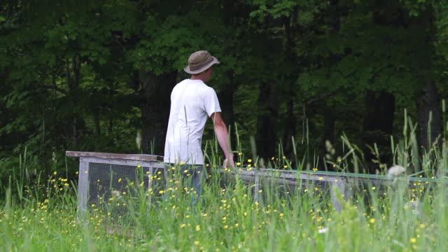 vídeos de stock e filmes b-roll de ms slo mo pan shot of young farmers moves chicken tractor/coop at organic farm / chatham, michigan, united states - galinheiro