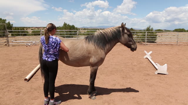 ms shot of young girl brushing her horse / santa fe, new mexico, united states - 働く動物点の映像素材/bロール