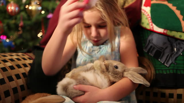 ms shot of young girl brushing her two bunnies / lamy, new mexico, united states - lamy new mexico stock videos and b-roll footage
