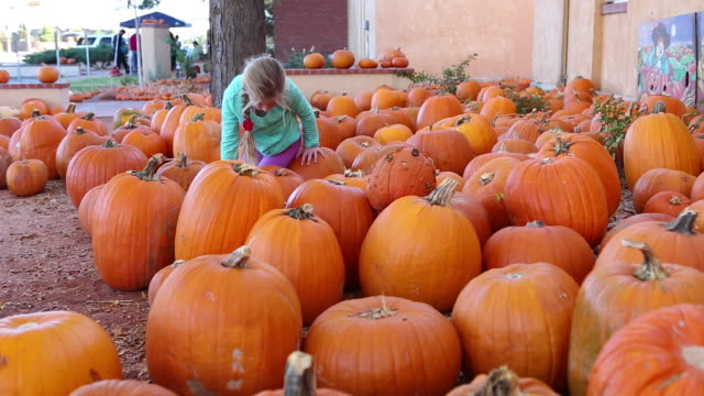 ms shot of young girl climbing on top of pumpkins at pumpkin patch / lamy, new mexico, united states - lamy new mexico stock videos & royalty-free footage