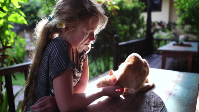 vidéos et rushes de cu shot of young girl cuddling with her cat / ubud, bali, indonesia - animaux de compagnie