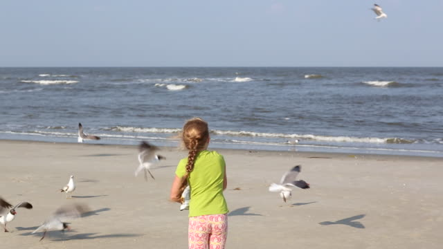 MS Shot of young girl feeding large group of seagulls on the beach / St Simon's Island, Georgia, United States