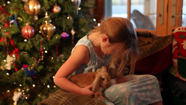 ms shot of young girl holding her two bunnies at christmas morning / lamy, new mexico, united states - lamy new mexico stock videos & royalty-free footage