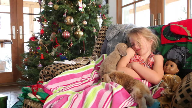 ms pan shot of young girl holding her two bunnies at christmas morning / lamy, new mexico, united states - lamy new mexico stock videos & royalty-free footage