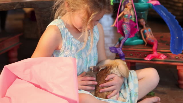 cu shot of young girl holding two bunnies in her lap / lamy, new mexico, united states - lamy new mexico stock videos and b-roll footage