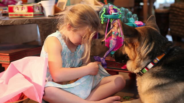 ms shot of young girl holding two bunnies in her lap / lamy, new mexico, united states - lamy new mexico stock videos & royalty-free footage