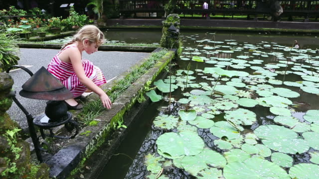 ms shot of young girl looking at pond full of water lilies / ubud, bali, indonesia - lily stock videos & royalty-free footage
