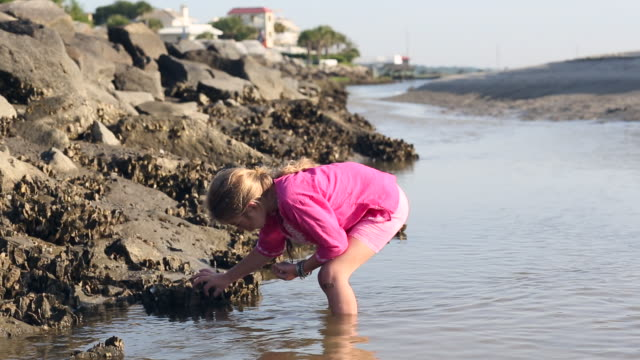 MS Shot of young girl looking for shells at beach / St Simon's Island, Georgia, United States
