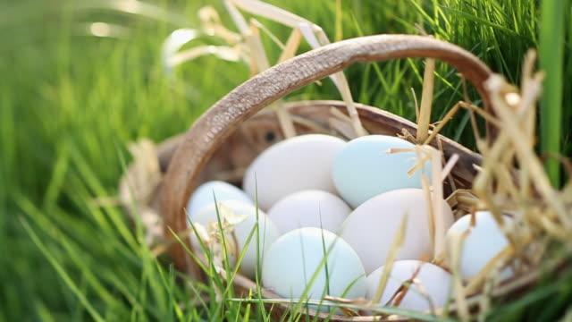 ms shot of young ladies hand takes blue egg from rustic basket / london, united kingdom  - einige gegenstände mittelgroße ansammlung stock-videos und b-roll-filmmaterial