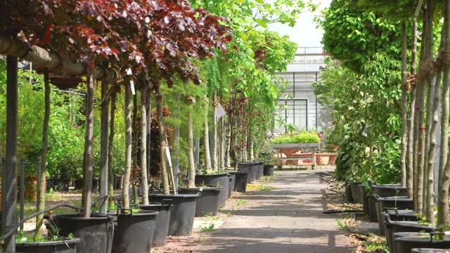 ms shot of young trees in nursery / saarburg, rhineland palatinate, germany - plant nursery stock videos and b-roll footage
