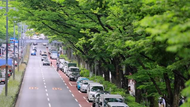 MS ZI Shot of Zelkova trees line both sides of Omotesando with cars and street lights / Shibuya, Tokyo, Japan