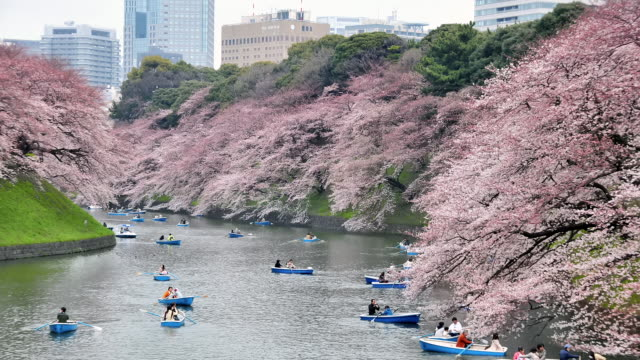 ws t/l shot on day of people rowing boats along river with cherry blossom trees / tokyo, japan - kanto region stock videos and b-roll footage