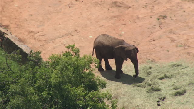 ms aerial shot over elephant at zoo / bloemfontein, free state, south africa - bloem plant stock videos & royalty-free footage