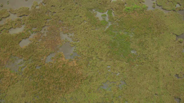 ms aerial shot over marsh / louisiana, united states - marsh stock videos & royalty-free footage
