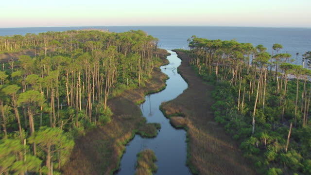 WS AERIAL Shot over tall trees and swamp island to Gulf of Mexico / Cat Island, Mississippi, United States