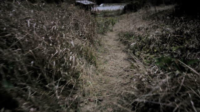 pov shot walking/running through dark spooky grass. escaping through the forest and meadow and cottage near a lake or beach - fear stock videos & royalty-free footage