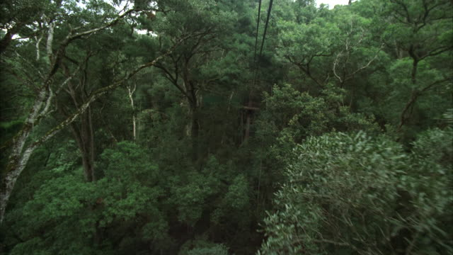 POV shot while on a canopy tour, or canopy zip lining, to a platform
