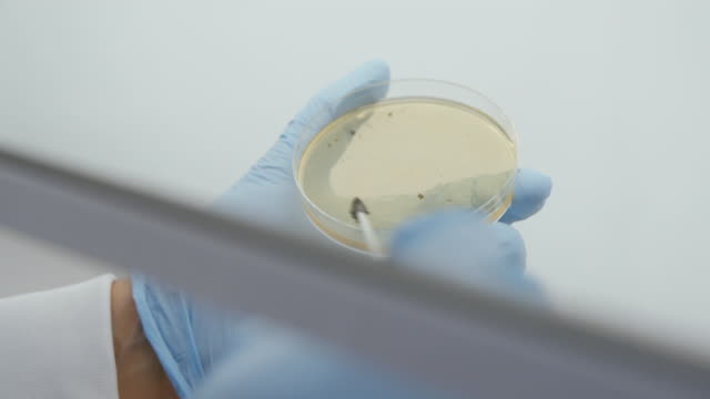 shots of antibiotic research in lab - bacterium stock videos & royalty-free footage