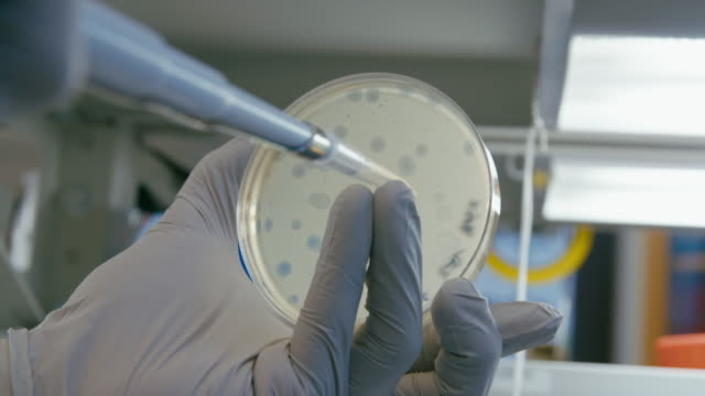 "shots of antibiotic research lab - ""bbc universal"" stock videos & royalty-free footage"