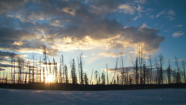 shots of boreal forest in canada - boreal forest stock videos & royalty-free footage