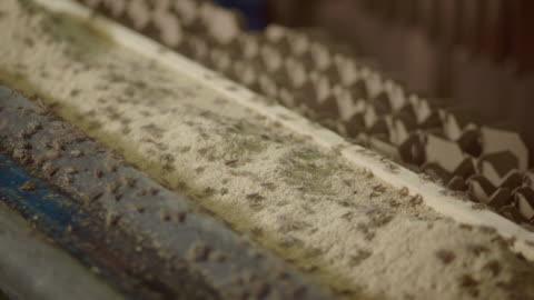 shots of crickets in a cricket farm - grillo insetto video stock e b–roll