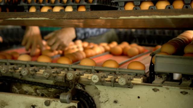 3 Shots of Eggs Sorting Machine
