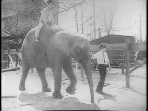 vídeos y material grabado en eventos de stock de shots of elephant being lead across the zoo / close up of elephant legs feet tail / close up on trunk at camera / shot of zookeeper washing a... - paramount building