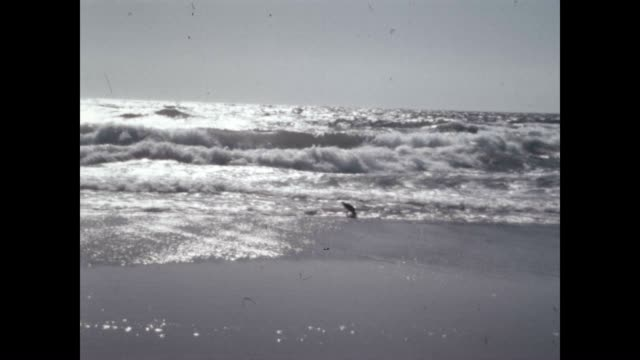 shots of the pacific ocean and beaches. - santa monica los angeles video stock e b–roll
