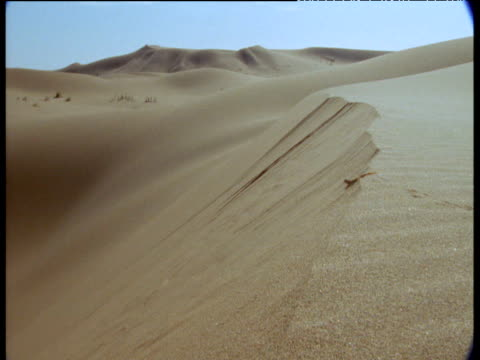 shovel snouted lizard runs over crest of sand dune and buries itself - digging stock videos and b-roll footage