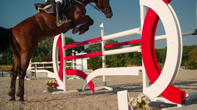 show jumping - recreational horseback riding stock videos & royalty-free footage