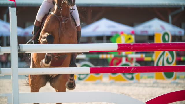 show jumping - competitive sport stock videos & royalty-free footage