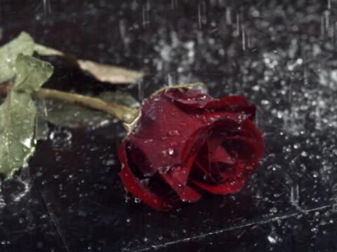 vídeos y material grabado en eventos de stock de shower on long-stemmed rose - una rosa