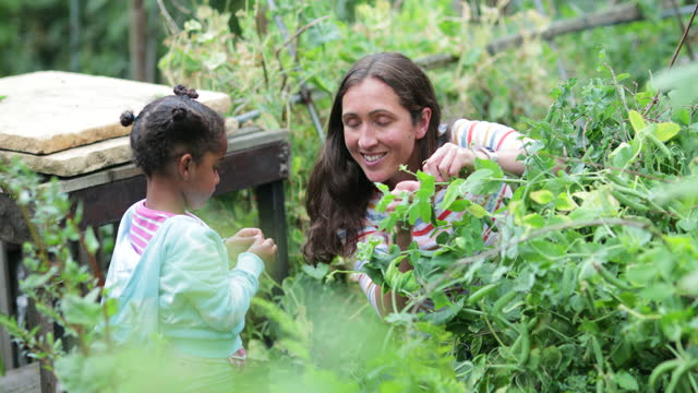 showing her the ropes - gardening stock videos & royalty-free footage