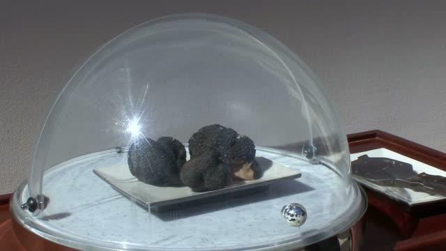 cu showing off truffle / livade, croatia - 盆点の映像素材/bロール