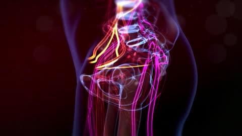gfx showing restless genital syndrome - torso bildbanksvideor och videomaterial från bakom kulisserna