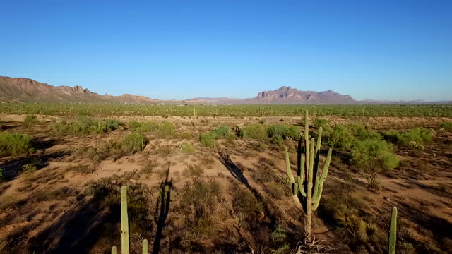 Shows aerial shots cactus in desert in Arizona on December 13 2016 in UNSPECIFIED UNSPECIFIED Region UNSPECIFIED