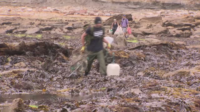 shows exterior shots coastline and cliffs near scarborough including volunteers clearing rubbish from along the shoreline exterior shots small boats... - seals stock videos and b-roll footage