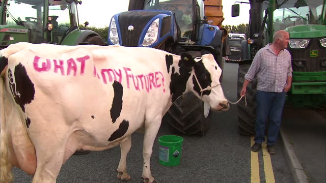 stockvideo's en b-roll-footage met shows exterior shots farmer protesting with cow with 'what is my future?' painted on its side. on august 09, 2015 in wigan, united kingdom. - dairy product