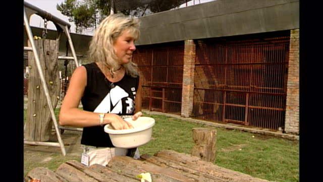 shows exterior shots jill robinson mbe founder and ceo laying out food and treats for asian black bears in an outside enclosure and securing electric... - 2002 stock-videos und b-roll-filmmaterial