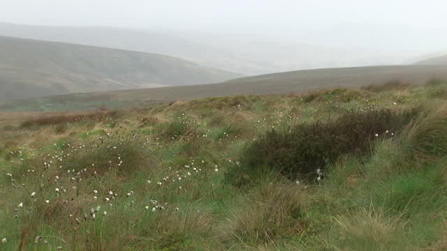 Shows exterior shots mist over Saddleworth Moor and wildflowers blowing in the wind Ian Brady one of the most notorious criminals in British history...