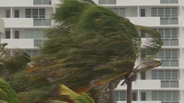 shows exterior shots palm trees lining beach in front of apartment blocks with leaves being blown around in strong winds as hurricane irma aprroaches... - 2017 stock videos & royalty-free footage