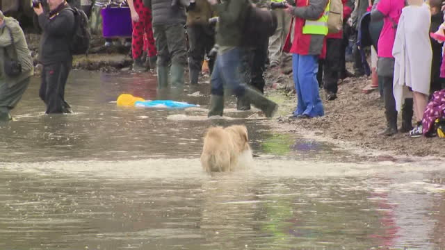 shows exterior shots pan into dog shaking itself in shallow water of along shore of the firth of forth following the loony dook swim. edinburgh's... - fluss firth of forth stock-videos und b-roll-filmmaterial