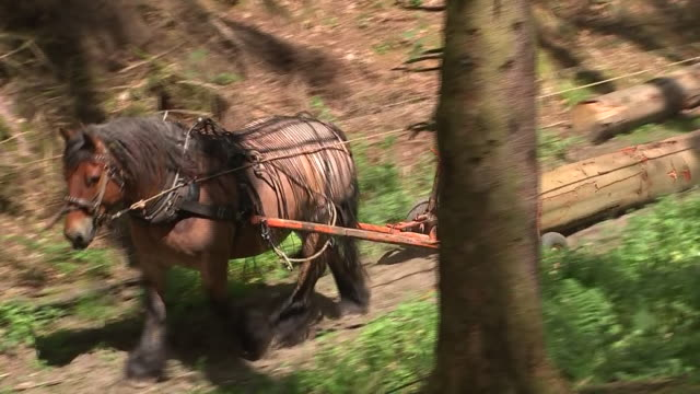 shows exterior shots people clearing woodland using horses to transport logs along tracks through wood on 1st july 2019 in llantrisant wales - log stock videos & royalty-free footage
