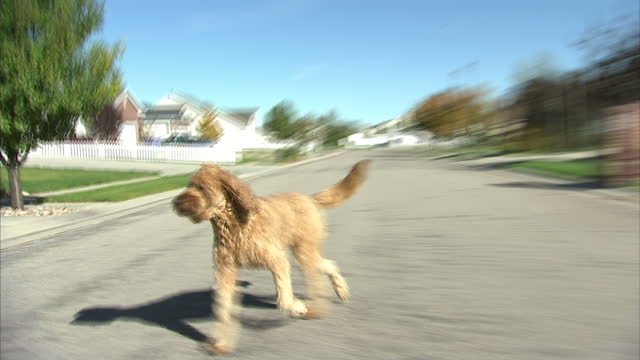 Shows exterior shots pov drive through suburban neighbourhood in Salt Lake City on October 16 2014 in Salt Lake City UT