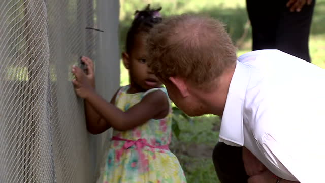 vídeos de stock e filmes b-roll de shows exterior shots prince harry visiting the 'nature fun ranch' in barbados meeting young ranchers at work looking after animals and bending down... - hiv aids conference