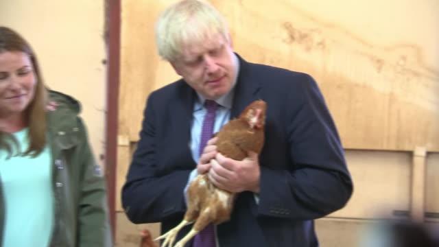 vídeos y material grabado en eventos de stock de shows interior shots british prime minister boris johnson mp holding a chicken on a farm in wales. yesterday the prime minister was greeted by boos... - boris johnson